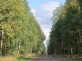 Дорога Большая Соснова - Тараканово